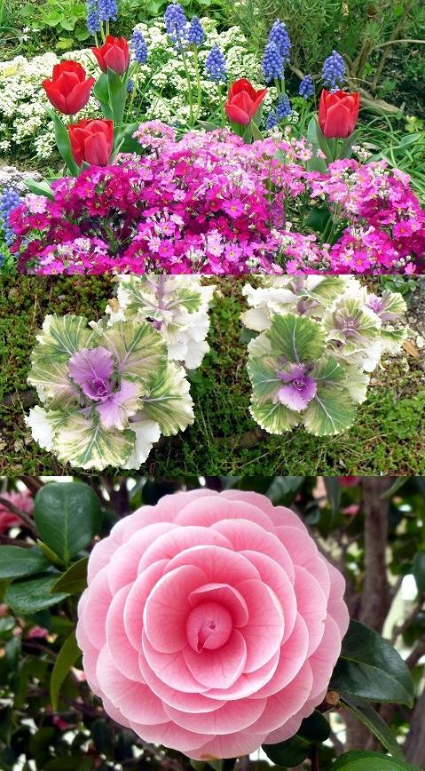 13.3.31宝塚のお花