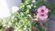 うちの花壇