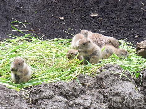 2013上野動物園_プレ3