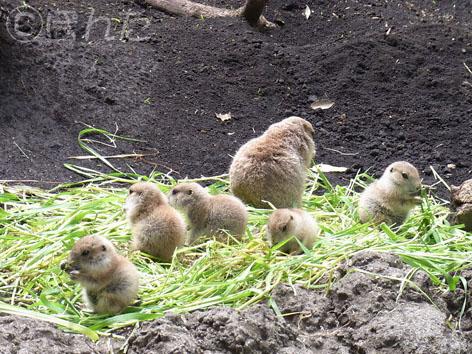 2013上野動物園_プレ1
