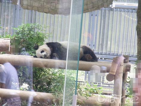 2013上野動物園_2