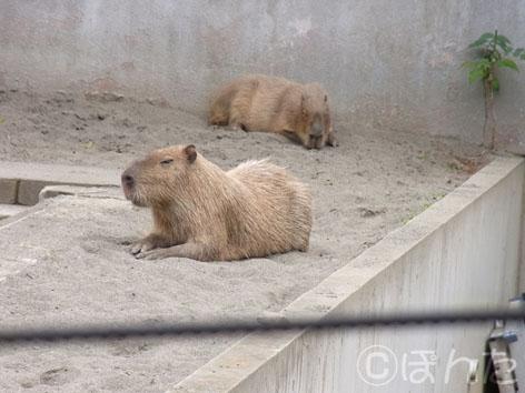 2013上野動物園_5