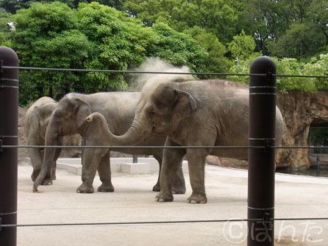 2013上野動物園_4