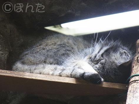 2013上野動物園_11