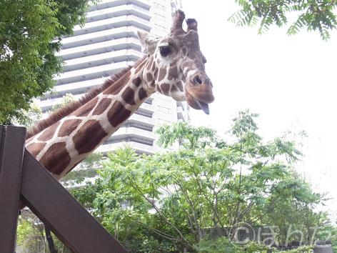 2013上野動物園_10