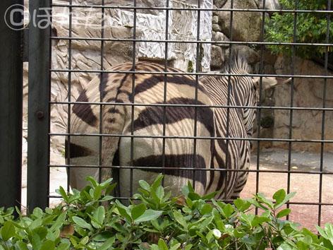 2013上野動物園_13
