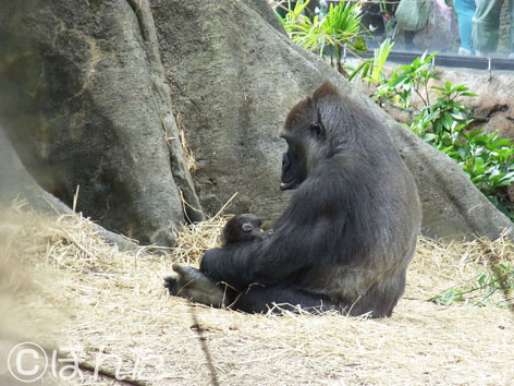 2013上野動物園_9