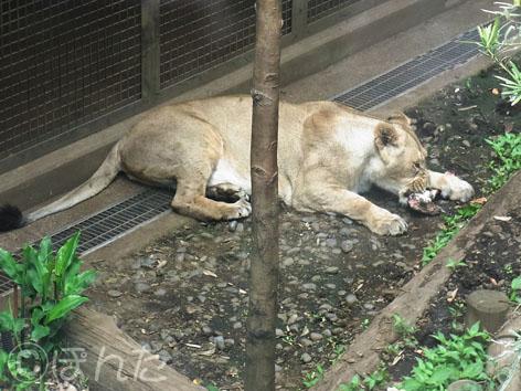 2013上野動物園_17