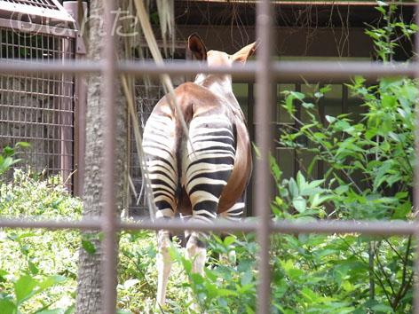 2013上野動物園_14