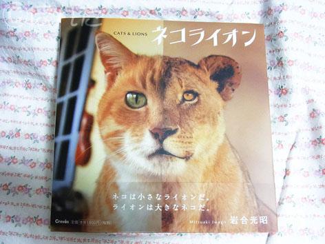 ねこライオン1