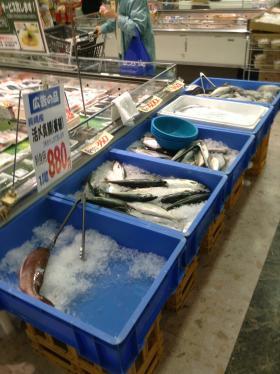 katori魚convert_20130907154204