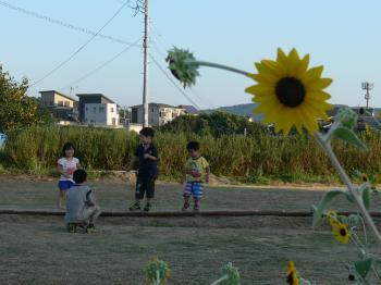 向日葵_convert_20130929120131