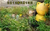 横浜早渕川20120613