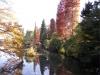 井の頭公園紅葉1