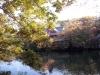 井の頭公園紅葉4