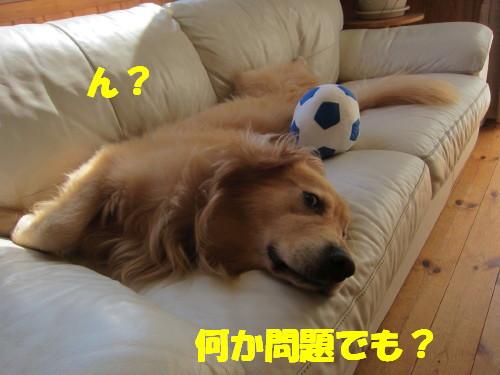 IMG_0563.jpg