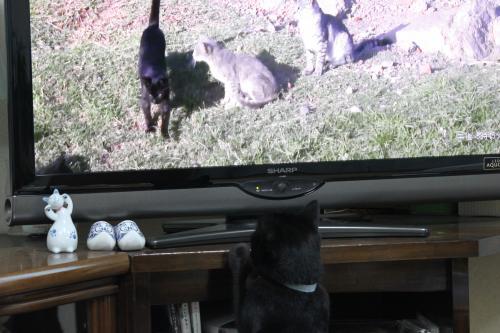 ネコ歩き 1