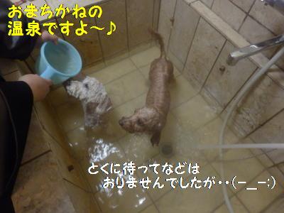 小笠原 わんこ温泉