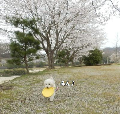 桜みゆ2A