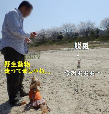 お散歩2X