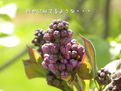 DSCN1381.jpg
