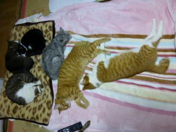 寝子、布団で寝る