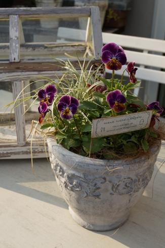 ビオラの寄せ植え~陶器鉢~