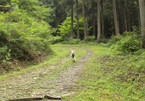 お山散歩3