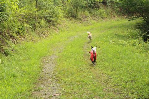 お山散歩5