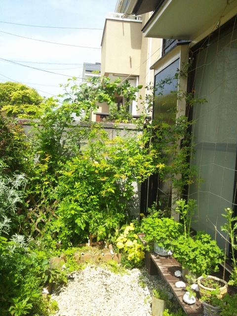2013 4 14 garden