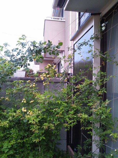 2013 4 17 garden
