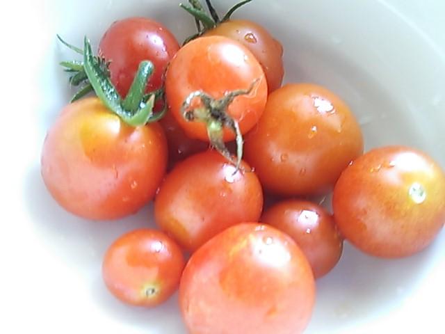 2013 8 7 tomato