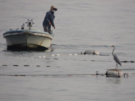 N2043漁師とサギ