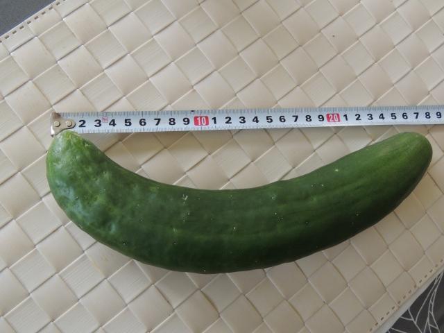 N2841長さを測る
