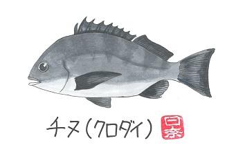 チヌ(クロダイ)