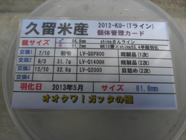 ガッタTライン818管理