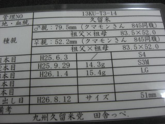 T3-14.jpg