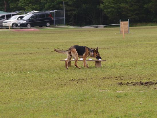 0622S犬2