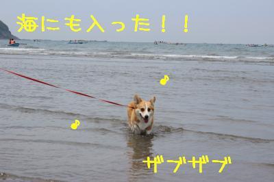 海にも入った!
