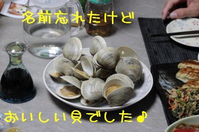 名前が分からない貝