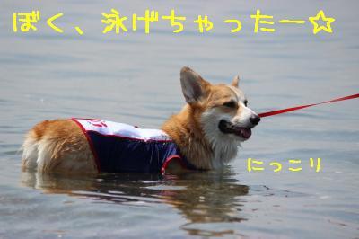 ぼく泳げちゃった♪