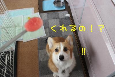犬生初すいか♪