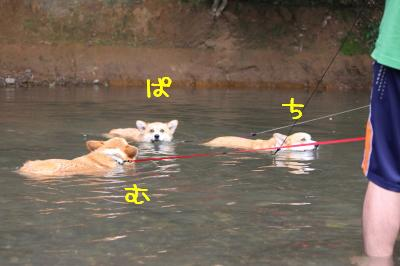 最後のヒト泳ぎ