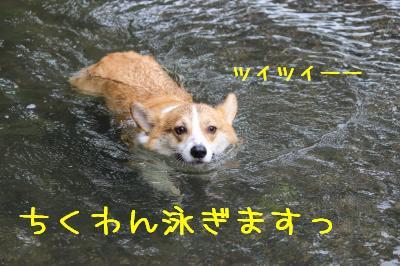 ちくわん泳ぐ