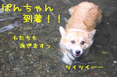 ぱんちゃん到着