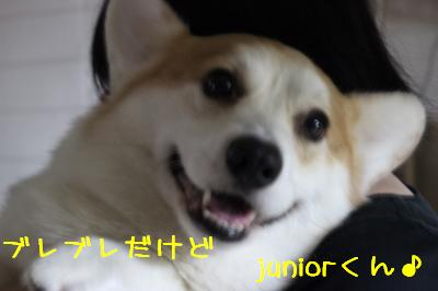 juniorくん