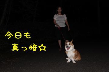 今日も暗闇散歩