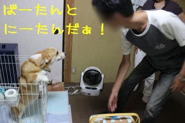 にーたんだぁ!