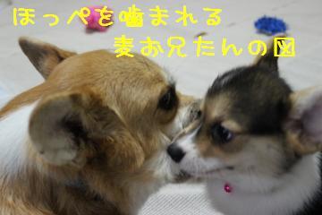 ひゃぃ~~ん 2