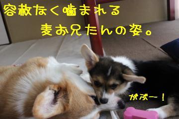 ひゃぃ~~ん!! 1